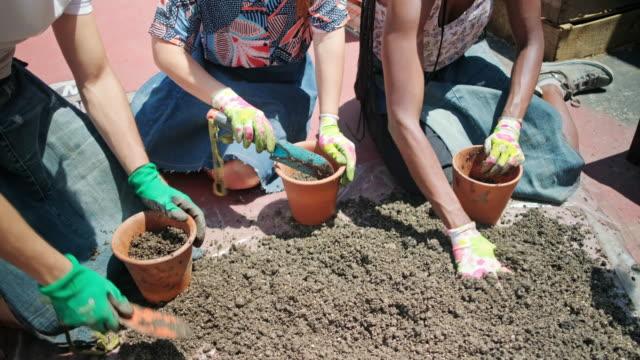 lächelnde junge freunde topfpflanzen in sonnigen dachgarten - urban gardening stock-videos und b-roll-filmmaterial