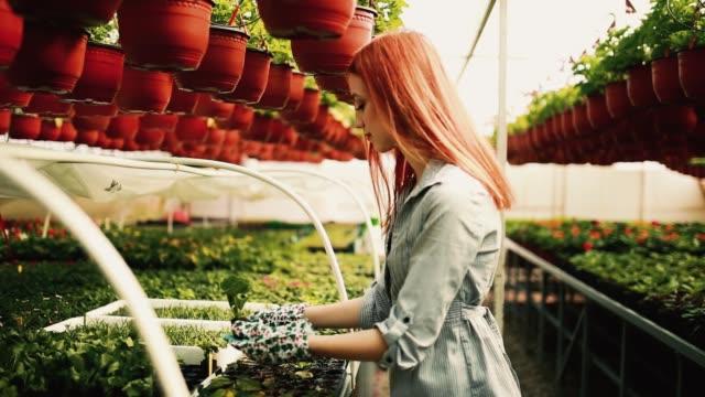 Smiling young gardener Smiling young gardener plant nursery stock videos & royalty-free footage