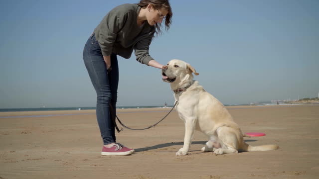 Smiling young woman in eyeglasses caressing labrador on beach.