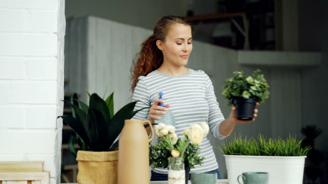 Smiling young woman is spraying green plants with water using spray bottle standing near table in modern loft style apartment. Youth and household concept. Smiling young woman is spraying green plants with water using spray bottle standing near table in modern loft style apartment. Youth, interior and household concept. potted plant stock videos & royalty-free footage