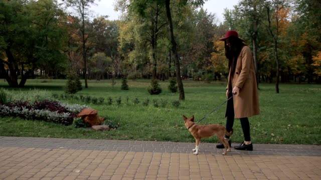 Smiling young woman stroking dog in autumn park video