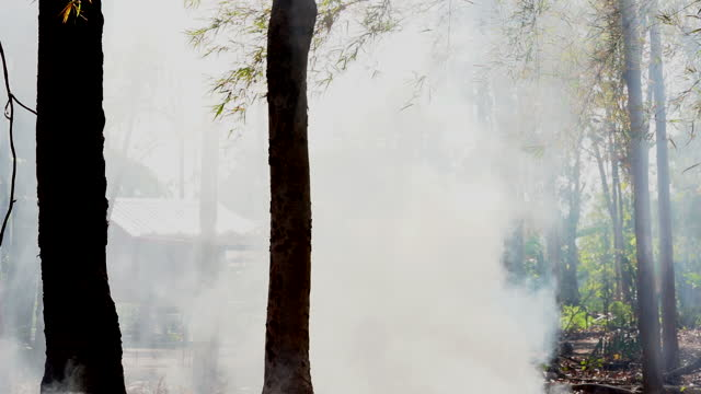 Smoke floating in forest from fire burning on hills