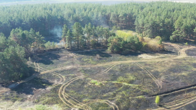 Smoke over forest, wild fire aerial view. Scorched earth and tree trunks after a spring fire in forest video
