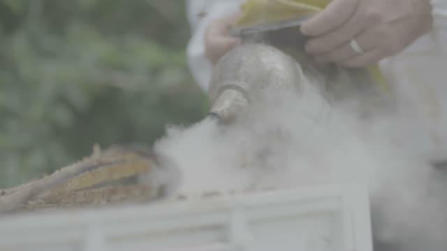 vidéos et rushes de fumeur utilisée sur les abeilles - apprivoisé