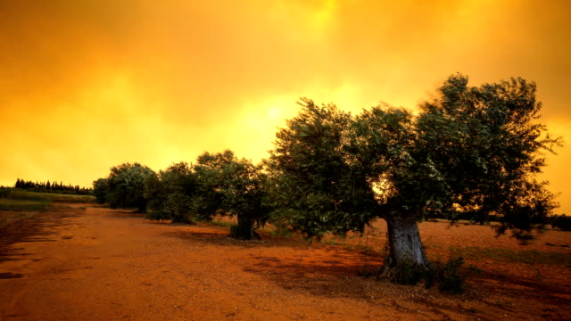 vidéos et rushes de ciel-fumeur - olivier