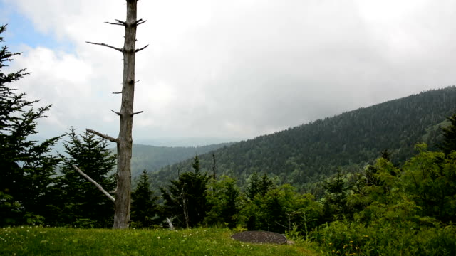 Smoky Mountain Forest and Dead Tree video