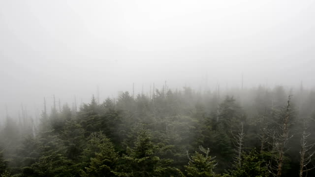 Smoky Mountain Tree Tops video