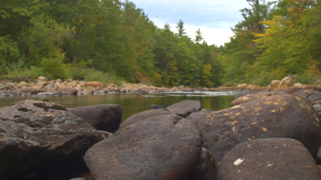 CLOSE UP, DOF: Smooth oval stones on the river bank in beautiful autumn forest video