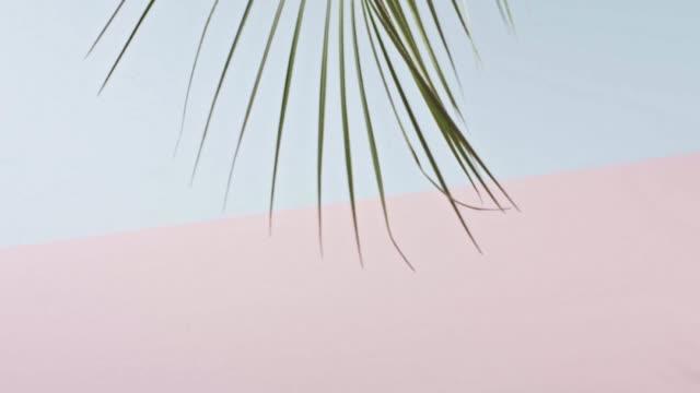 movimento lento e liscio di un ramo di una palma tropicale verde con foglie lunghe che toccano uno sfondo blu rosa duotone. ombre dal ramo. video full hd, 240 fps, 1080p. - full hd format video stock e b–roll