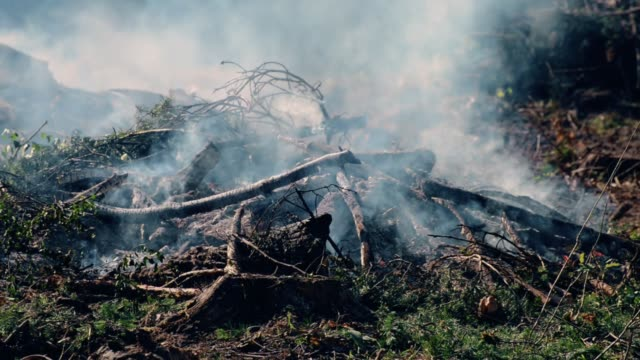 Smouldering fire in the forest video