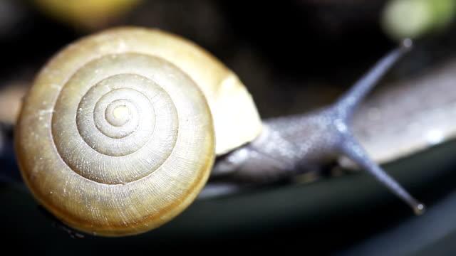 vidéos et rushes de escargot gros plan - coquille et coquillage
