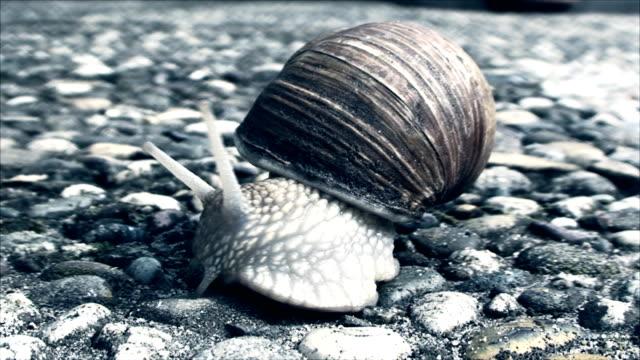 snail crawling on the concrete sidewalk video