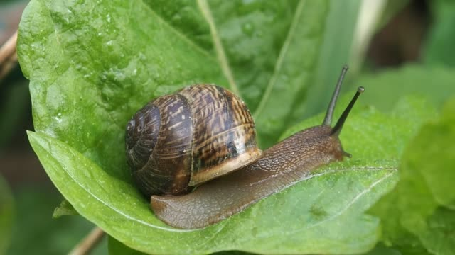 Snail crawling on the sheet after the rain.