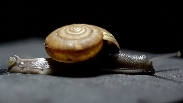 snail crawling video