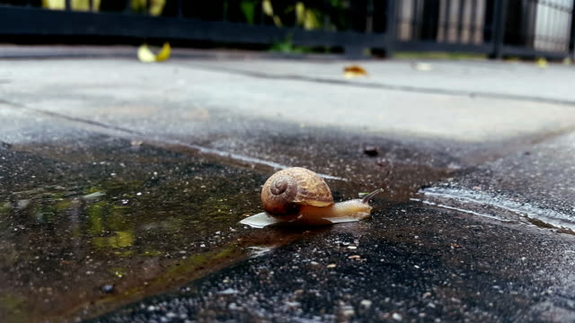 snail moving in the water acecelerated footage video