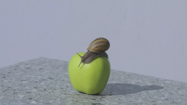 Snail on a green apple. Snail on an apple close-up. A snail is crawling over an apple.