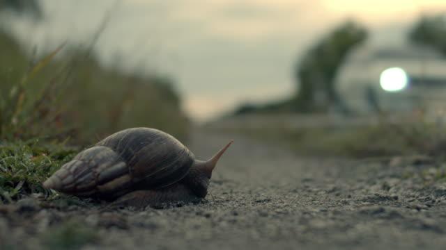 CU Snail on a roadside