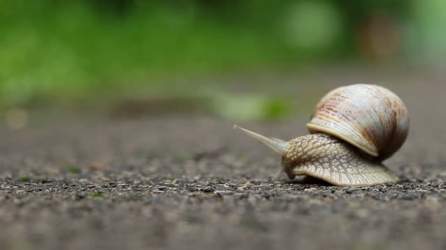 Snail on green foliage background video