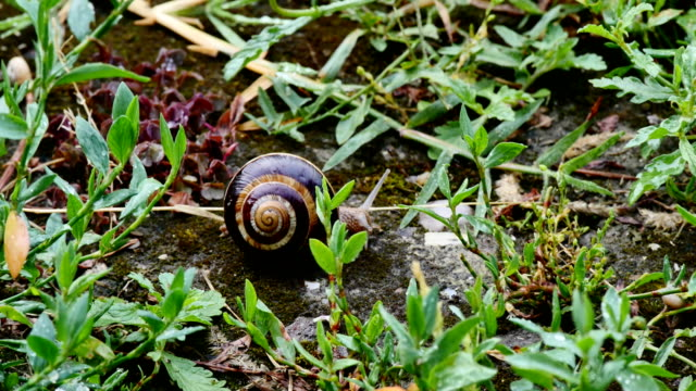 snail slides across 4k snail slides across 4k animal antenna stock videos & royalty-free footage
