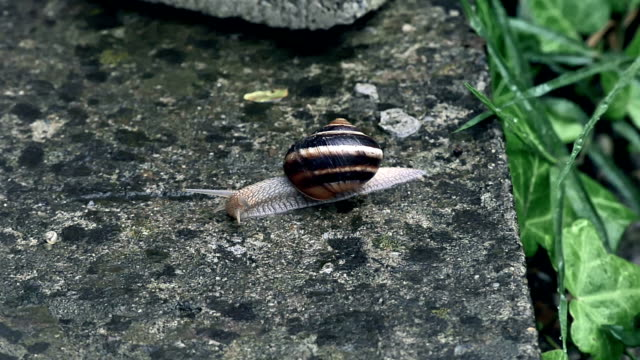 snail slides across video