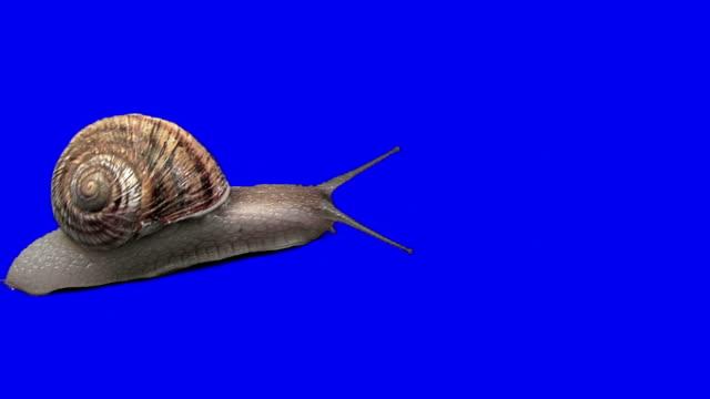 Snail (TimeLapse)