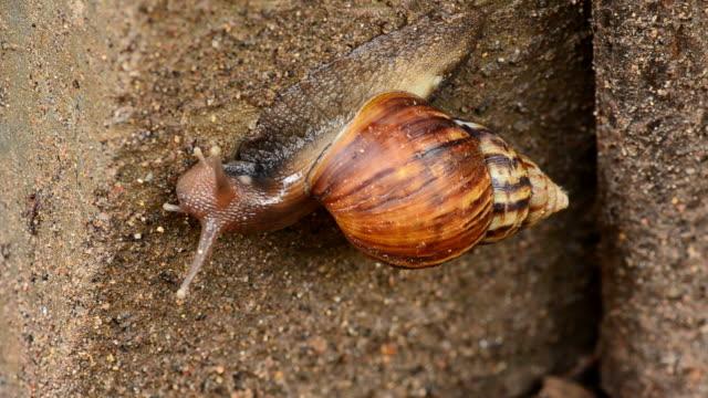 stockvideo's en b-roll-footage met snail - arthropod