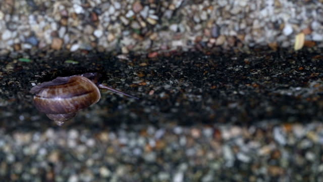 Snail walking on the old cement floor. video