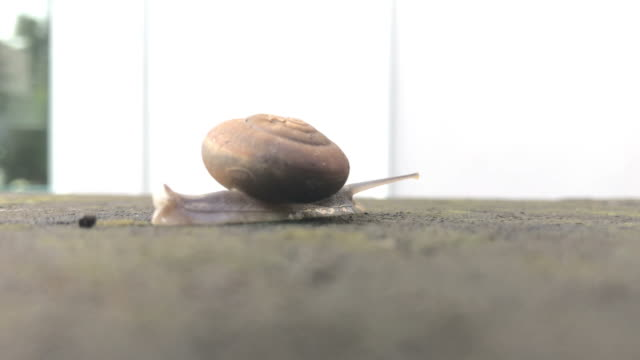 Snail walking on the wall video