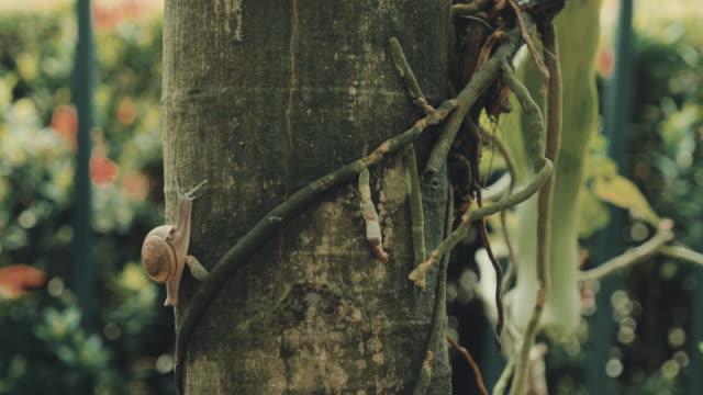 schnecke auf baum im regenwald wandern. - faul ast stock-videos und b-roll-filmmaterial
