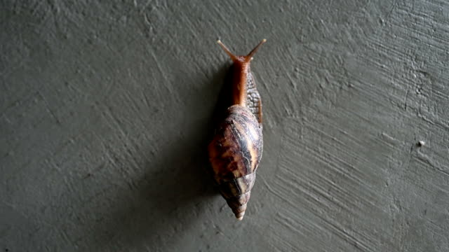 snails crawling on the concrete wall with copy space 4k footage.