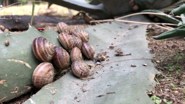 snails on the plant video