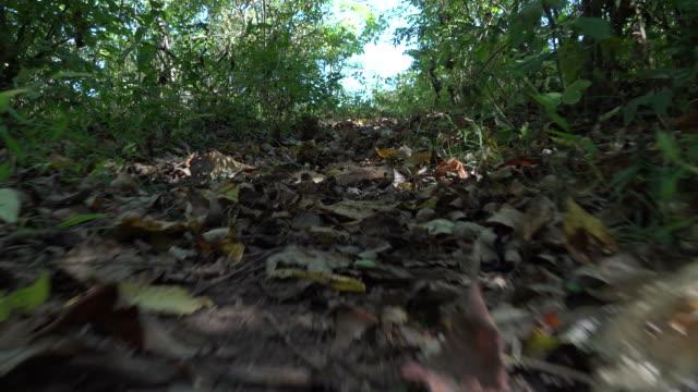 vídeos y material grabado en eventos de stock de serpiente animal punto de vista en el bosque - serpiente