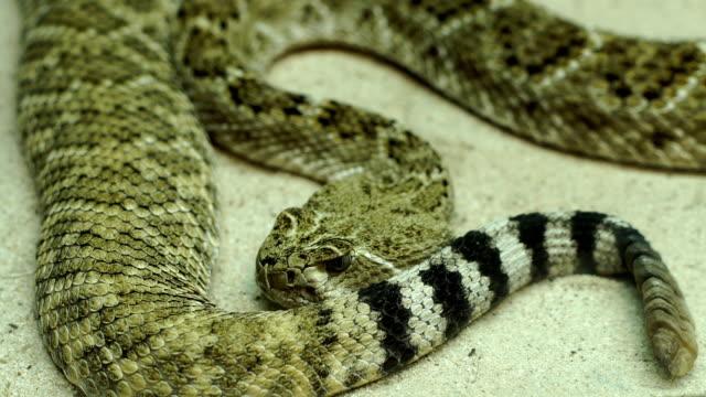 Snake Close Up video