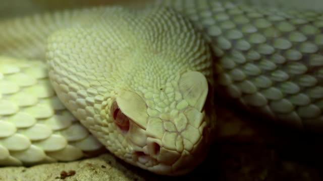 Serpiente ojo - vídeo