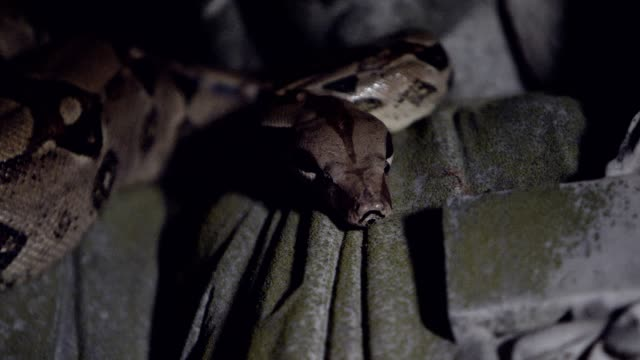 Snake on statue close up video