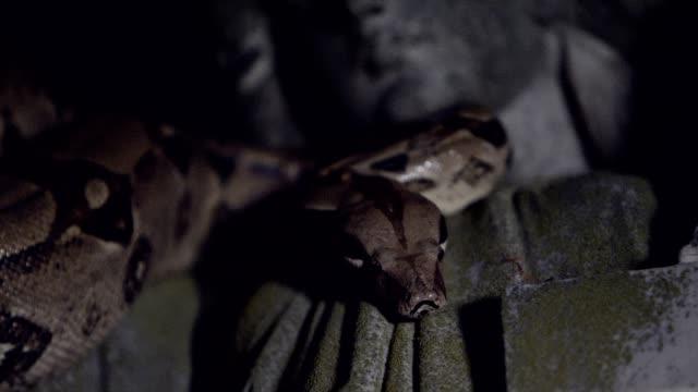Snake on statue rack focus video