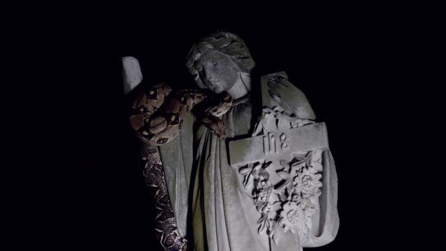 Snake on statue wide shot video