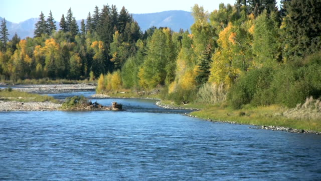 Snake River and Fall Colors video