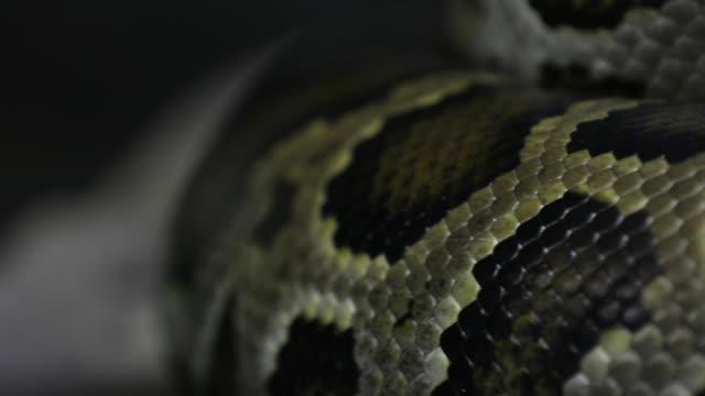 snake skin video