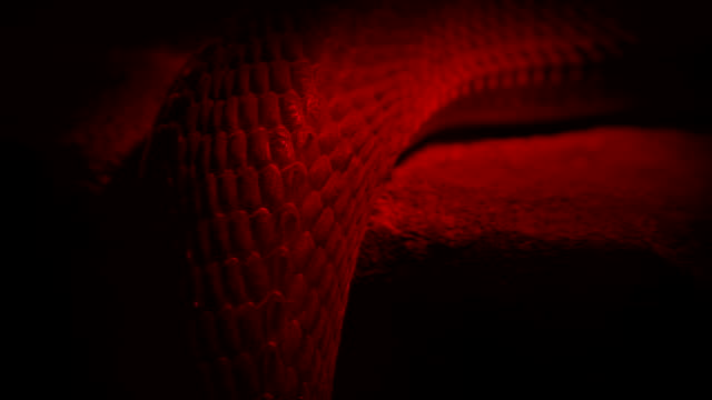 Video Snake Slithers Over Edge In Red Light