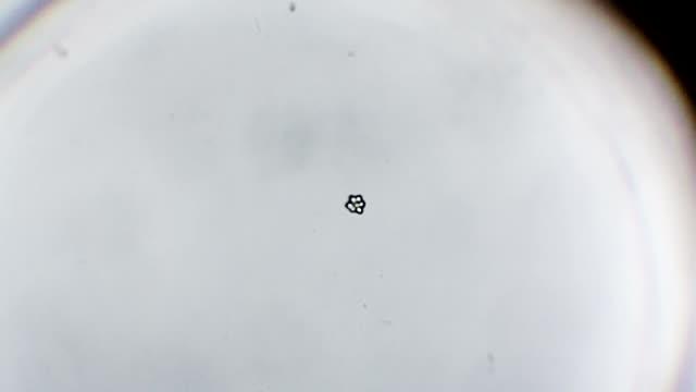 Snoflake appear timelapse video