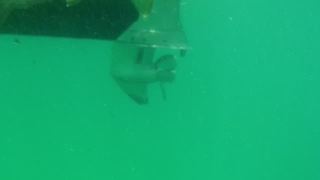 Snook Fishing video