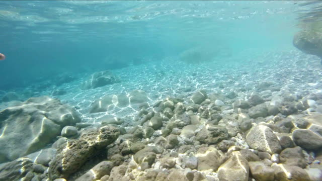Snorkeling and diving point of view video