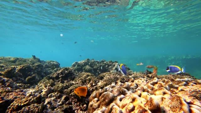 pov snorkling på la digue island, seychellerna - vattenlandskap bildbanksvideor och videomaterial från bakom kulisserna