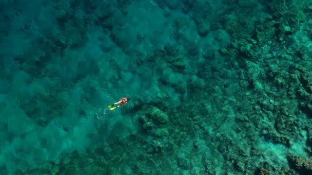 vídeos y material grabado en eventos de stock de snorkeling en mar turquesa claro - drone footage