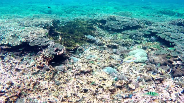 Snorkeling in Indonesian sea video