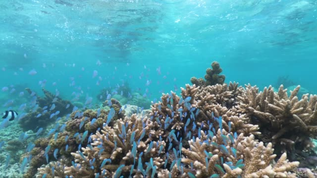snorkeling in the beautiful sea of mauritius protected by the reef on the indian ocean - isole mauritius video stock e b–roll