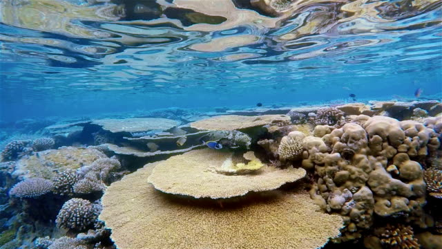 Snorkeling slow motion on coral reef / Maldives video