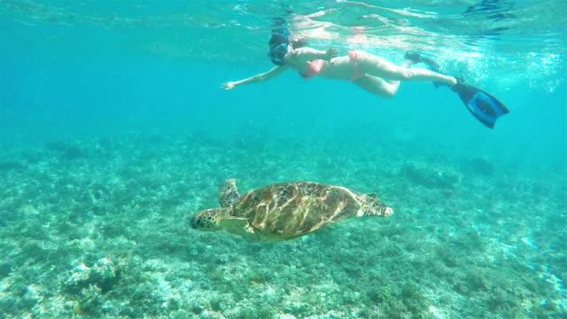 vídeos y material grabado en eventos de stock de buceo con una tortuga de mar. - tubo