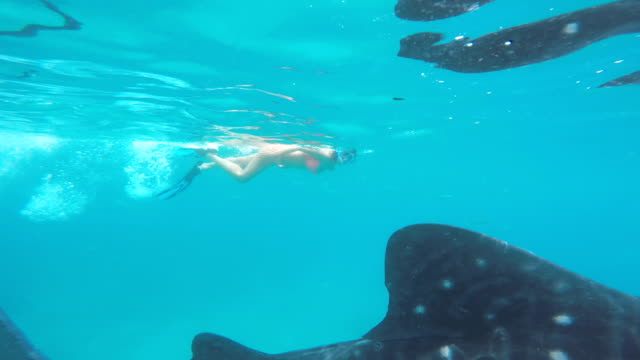 snorkeling with whale shark video